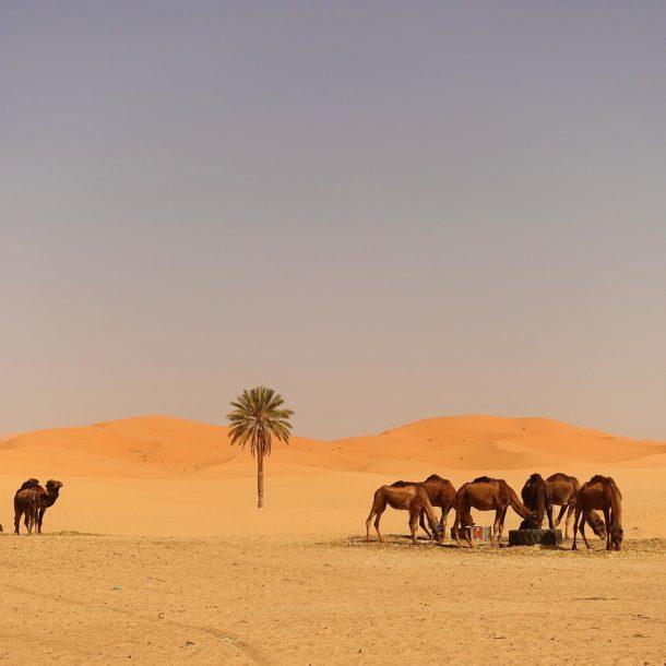 Arrive in the desert