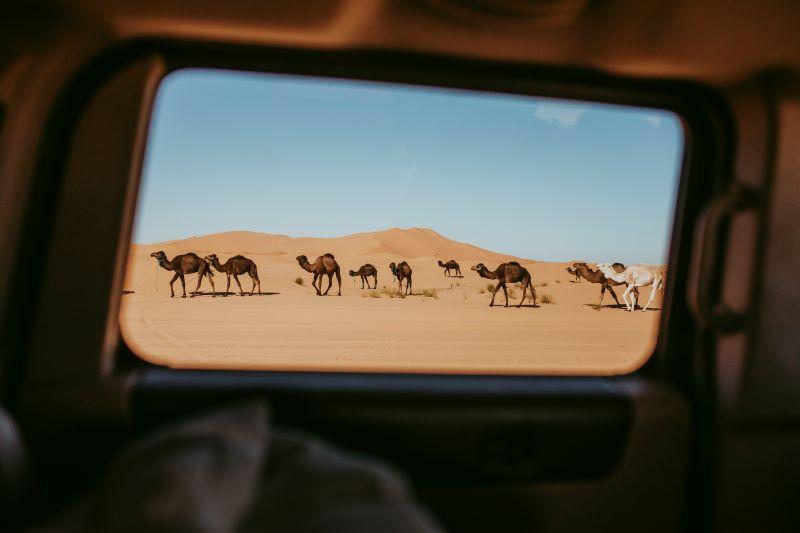 Vista de camellos en el desierto de Erg Chebbi en Merzouga a traves de un viaje en coche 4x4.